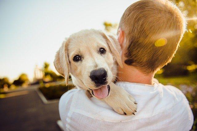 adorable dog and guy